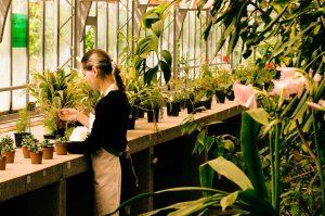 植物に囲まれる女性