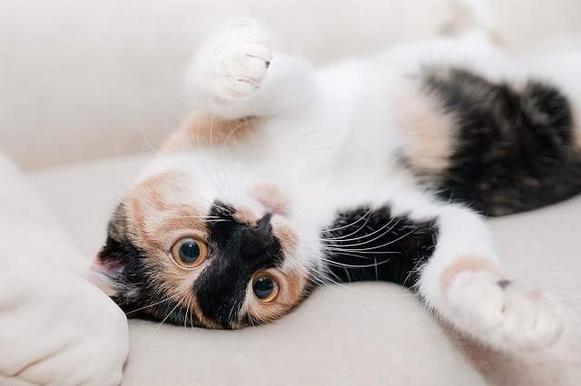 猫カフェを開くためには資格や申請が必要!